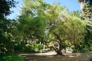 Tangled Tree boom