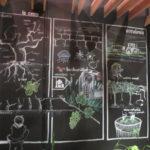 Bodega Menade biodiversiteit uitgebeeld