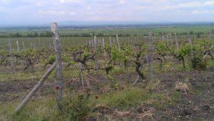 Wijngaarden-Zagreus-300x170
